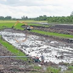 Long An: Nông dân tiếp tục đào ao nuôi cá tra giống