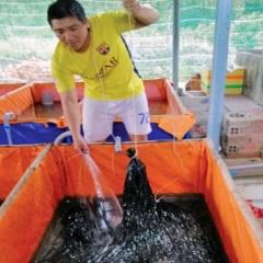 An tâm với nuôi lươn lót bạt