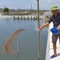 Thái Bình: Chủ động chống rét cho loài thủy sản nuôi qua mùa đông