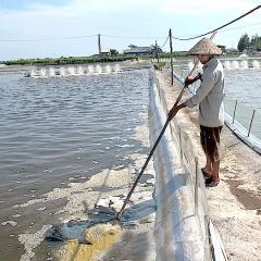 Ứng dụng giải pháp cải tạo nguồn nước trong nuôi thủy sản