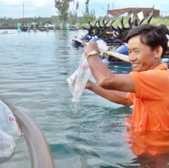 Diện tích nuôi tôm Quảng Nam sẽ bị thu hẹp 698ha