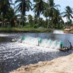 Bến Tre sẽ xử lý nghiêm trường hợp nuôi tôm biển ngoài vùng quy hoạch