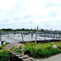 Mạnh tay xử lý vi phạm môi trường trong nuôi tôm siêu thâm canh