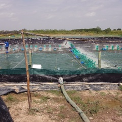 Đặc điểm các loại nước thải, chất thải nuôi tôm