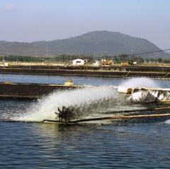 Thanh Hóa: Nhân rộng nuôi trồng thủy sản theo VietGAP