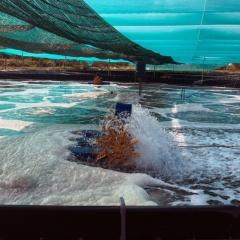 Ứng dụng Khoa học công nghệ trong nuôi thủy sản Kiên Giang