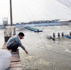 Chủ động tránh rét bảo vệ thủy sản trong vụ đông