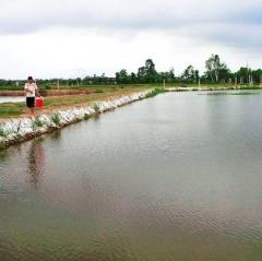 Thanh Hóa chuyển 880 ha lúa kém hiệu quả sang nuôi thủy sản