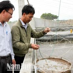 Vùng nuôi tôm công nghiệp hiệu quả cao ở Hải Đông