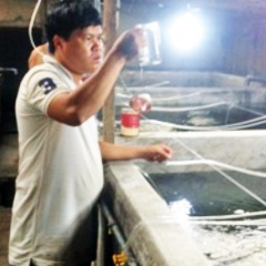 Thu lời nửa tỷ/năm nhờ sản xuất giống cá chẽm
