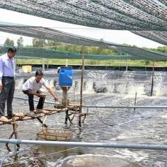 Cà Mau: Diện tích nuôi tôm siêu thâm canh đạt mốc trên 2.000ha