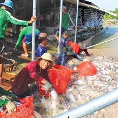 Cơ hội tái cấu trúc ngành cá tra