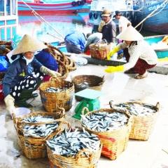 Ngư dân Quảng Ngãi thất thu vụ cá Nam