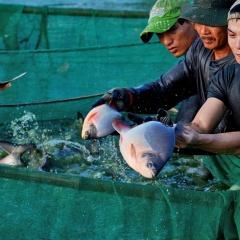 Bảo vệ thủy sản nuôi trong mùa mưa bão