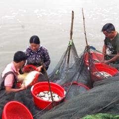 """""""Đánh thức"""" 565 ha ao hồ nước ngọt, nông dân Can Lộc thu 30 tỷ đồng/năm"""