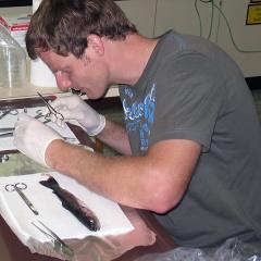 Phát hiện virus gây hội chứng sậm màu tăng sinh ở cá hồi