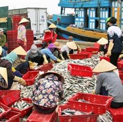 Phấn đấu đạt gần 1,6 triệu tấn cá vụ Bắc