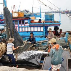 Đà Nẵng: Đẩy mạnh phát triển thủy sản trên địa bàn thành phố