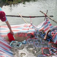 Nuôi cá bống bớp: Hướng mới cho vùng tôm dịch bệnh