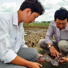Phòng và trị một số bệnh cho cá nuôi trong mùa đông