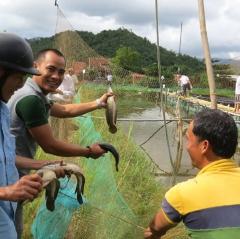 Thành công mô hình nuôi cá lóc ở Đông Hòa - Phú Yên