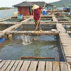 Kỹ thuật phòng bệnh tổng hợp cho cá nuôi