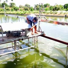 """Nuôi cá """"sông trong ao"""": Mô hình hiệu quả bền vững"""