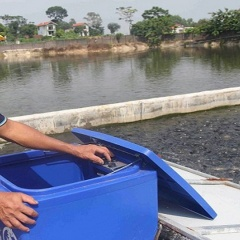 """Lãi 400 triệu sau 6 tháng nuôi cá theo công nghệ """"sông trong ao"""""""