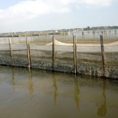 Lưu ý khi nuôi ghép cá trắm với cá rô phi trong lồng ở vùng đầm phá
