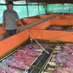 Nuôi lươn không bùn theo tiêu chuẩn VietGap