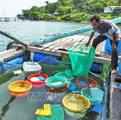 Tiên Hải chú trọng phát triển mô hình nuôi ốc hương