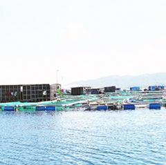 Để nghề nuôi trồng thủy sản biển Khánh Hòa bền vững