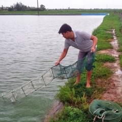 Thanh Hóa: Hướng dẫn chống rét cho vật nuôi thủy sản