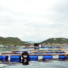 Bàn giải pháp xử lý môi trường vùng nuôi vịnh Xuân Đài