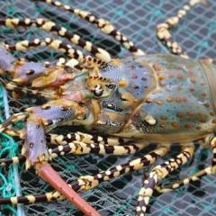 Khó tuân thủ quy hoạch: Nghịch lý ở vùng nuôi thủy sản