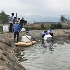 Quảng Ninh: Hiệu quả mô hình nuôi tôm sú an toàn sinh học