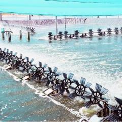 Giải pháp phát triển bền vững nuôi tôm siêu thâm canh