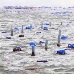 Nuôi tôm vùng biển hở: Giải pháp giảm tải cho đầm vịnh