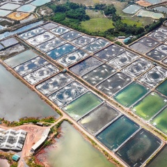 Phát triển kinh tế biển Đầm Hà