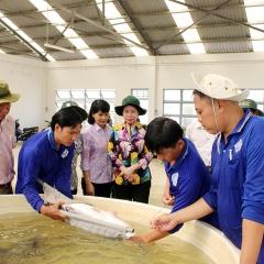 Đồng Tháp: Giá cá tra nguyên liệu giảm