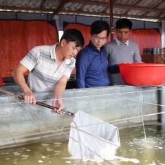 Hải Hậu chủ động con giống cho phát triển nuôi thủy sản