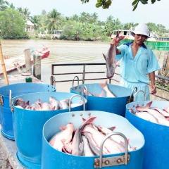 Nhiều doanh nghiệp thủy sản lãi lớn