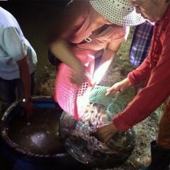 Thừa Thiên Huế: Gia cố bờ bao hàng chục ha tôm trong mưa lũ