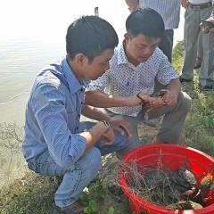 Tôm thẻ - cua - cá đối mục: Hướng mới với vùng nuôi tôm thường xuyên dịch bệnh