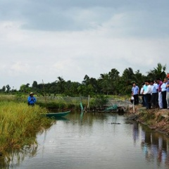 Cà Mau sẽ có vùng sản xuất lúa - tôm hữu cơ tập trung, quy mô lớn