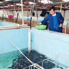Chăm sóc cá giống trong mùa đông