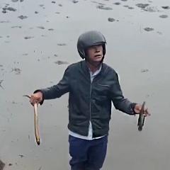 Cá chết bất thường tại Quảng Trị