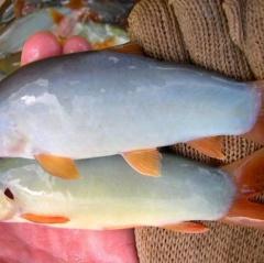 Mật độ phù hợp cho nuôi vỗ thành thục cá heo