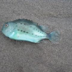Làm thế nào để cải thiện hiệu quả nuôi cá làm sạch