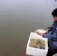 Tiền Hải: Phòng, chống rét trong nuôi trồng thủy sản